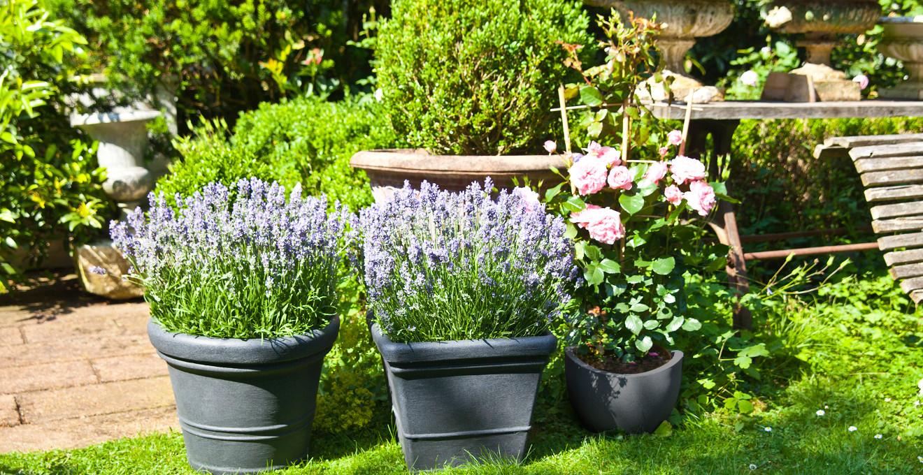 Gartenpflanzen  Gartenpflanzen bis zu 70% günstiger I WESTWING