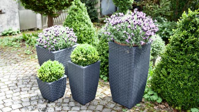 Vorgartengestaltung mit Blumenkübeln