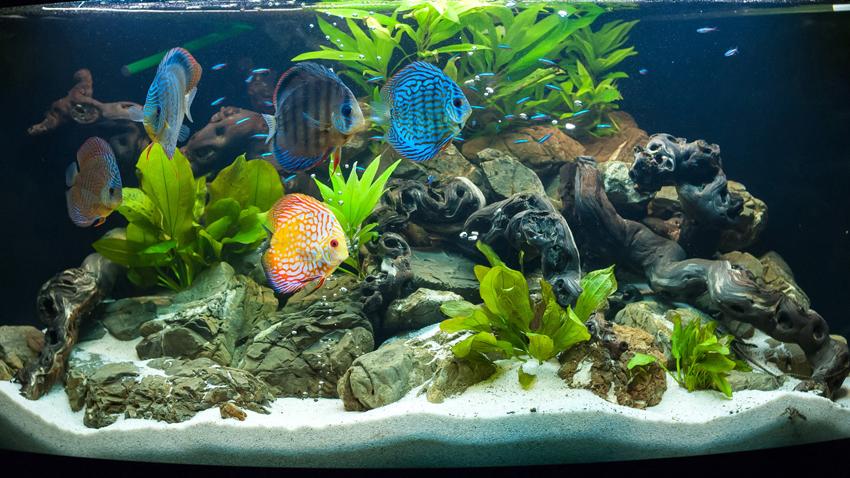 Aquarium als Raumteiler