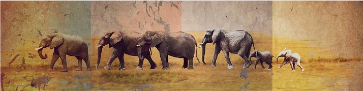 Identity Art Elefanten