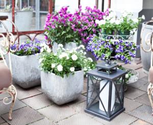 Plantas de balcón