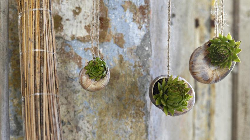 plantas colgantes - Plantas Colgantes