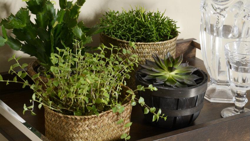 Huerto interior vida y cocina con estilo westwing for Casetas de huerto