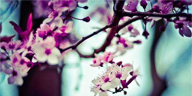Couronne de printemps