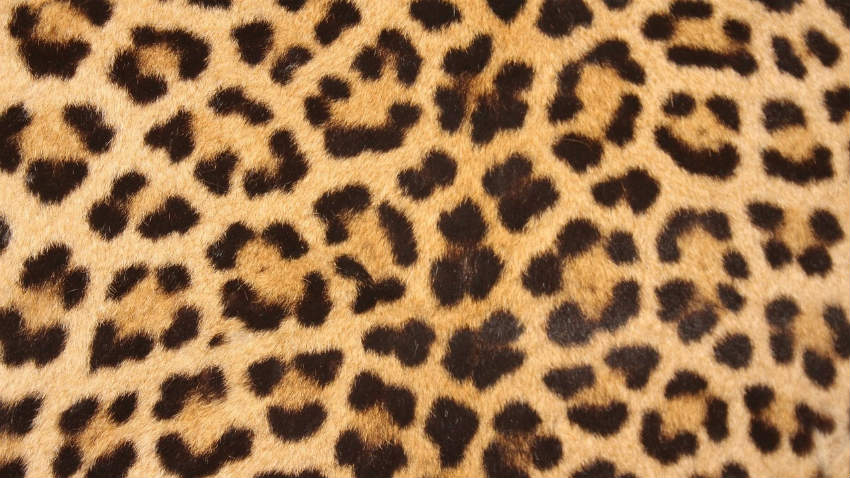 Tappeti leopardati