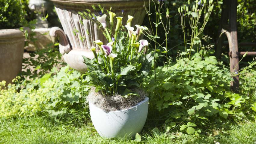 Vasi per piante grasse graziosi contenitori dalani e - Vasi con piante grasse ...