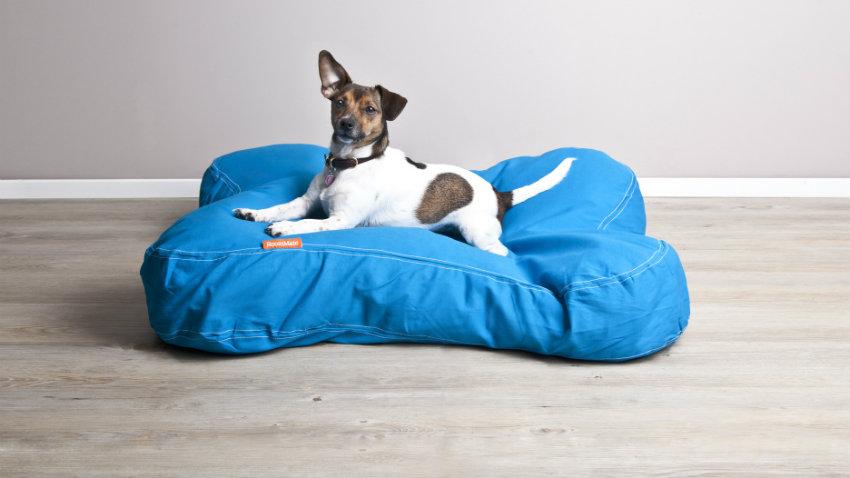 Cuscini per cani di taglia media