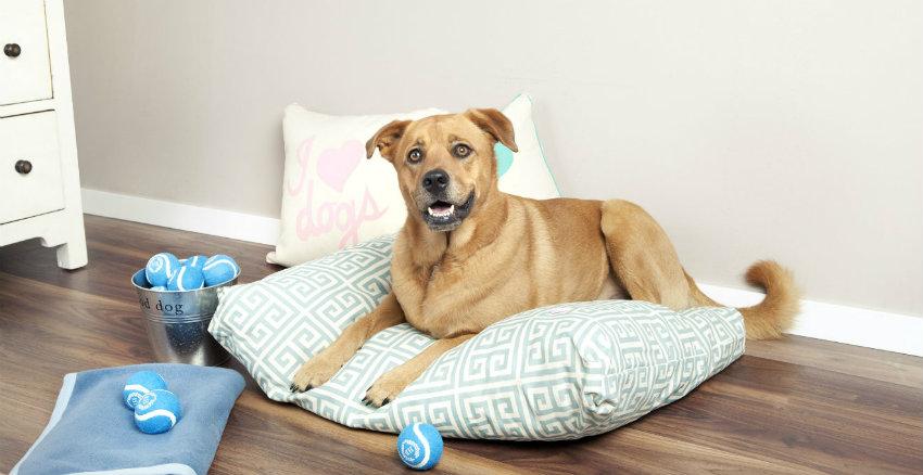 Cuscini impermeabili per cani