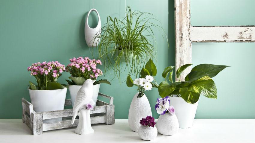 Beautiful Vasi Da Terrazzo Online Images - Design and Ideas ...