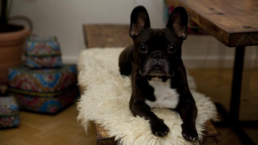 Cuccia per cani in resina