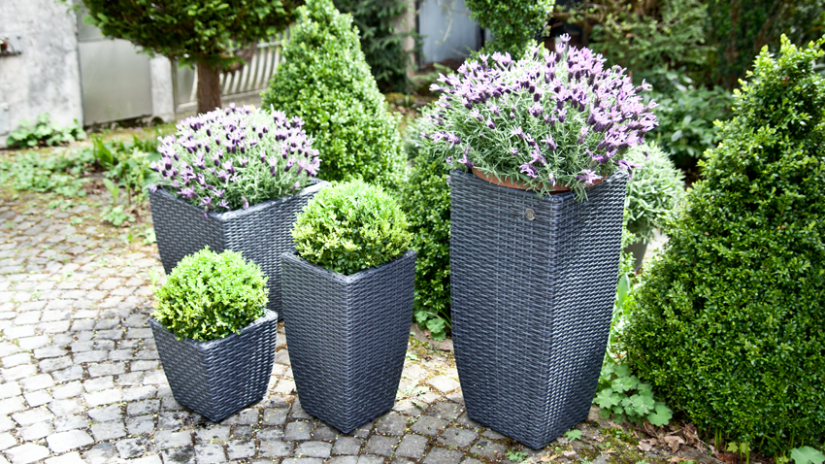 Doniczki — ciesz się ogrodem w swoim domu | WESTWING