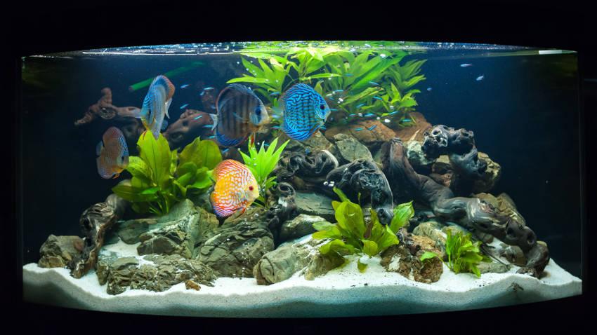 Ozdoby do akwarium