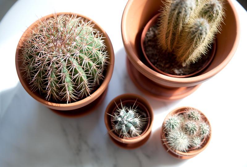 El toque natural de este apartamento scandi lo ponen el surtido de cactus del salón.