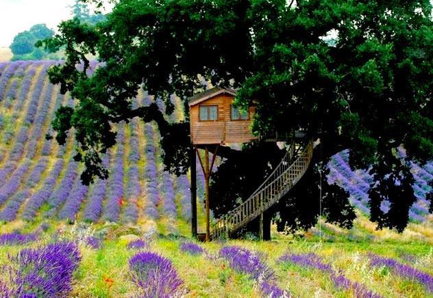 casa sull'albero lavanda