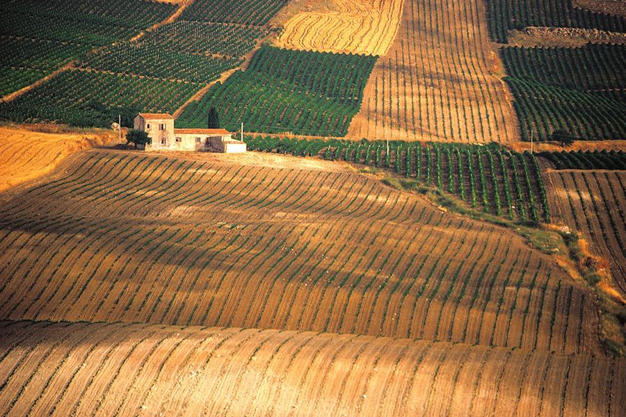 Vino, Dalani, Sicilia, Made-in-Italy