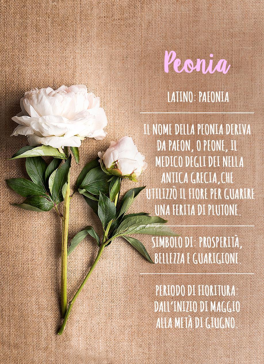 Peonie, Come curare le peonie, Fiori, Primavera, Giardino, Casa