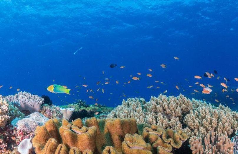 In fondo al mare - Stile underwater