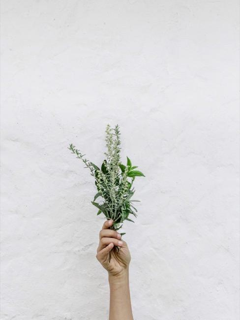 Hand hält ein Bündel mit verschiedenen Blüten und Pflanzenblättern