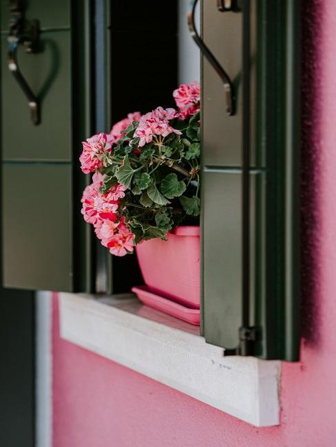 Rosa Haus mit einem von außen dekoriertem Fensterbrett durch einen schönen Blumenkasten