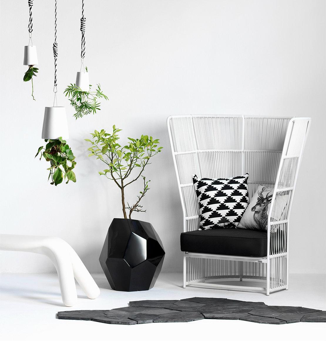 Plan detox para casa plantas
