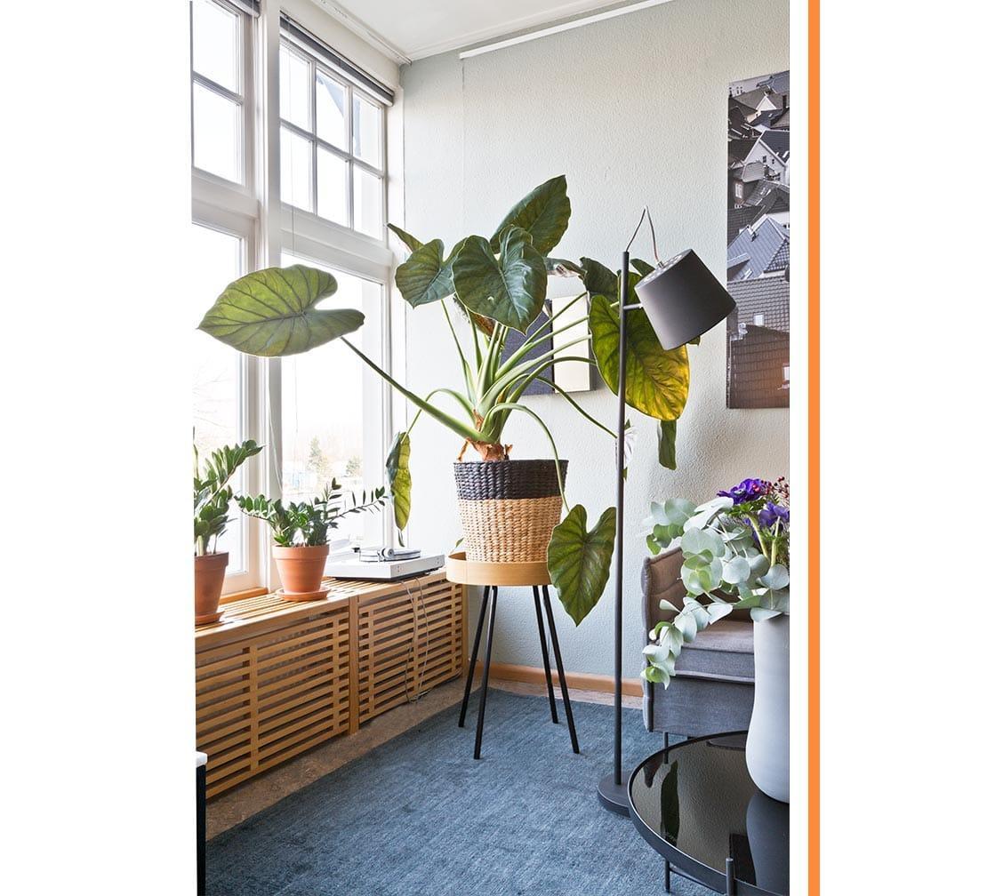 restyling di un interno pianta