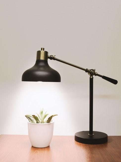 lampada da tavolo accesa che illumina cactus