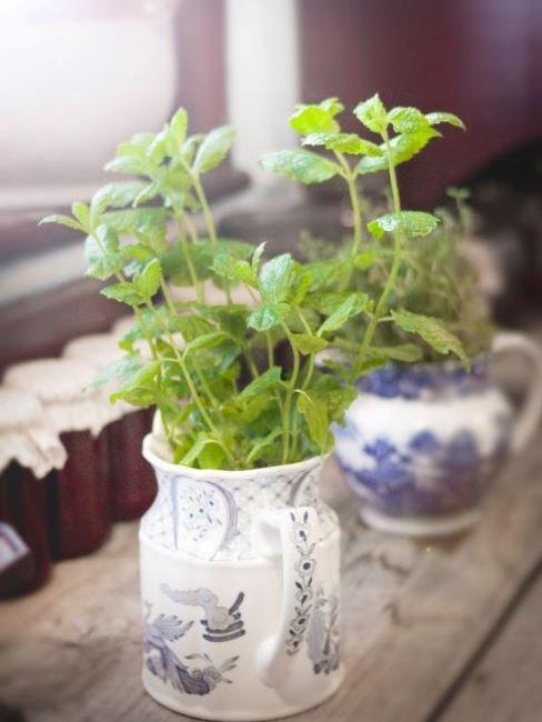 pianta aromatica in vaso e barattoli riutilizzati