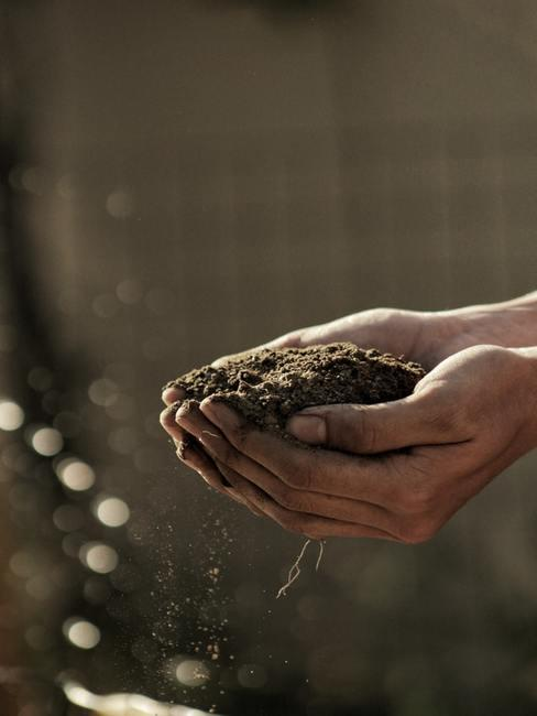 Ręcę trzymające ziemię