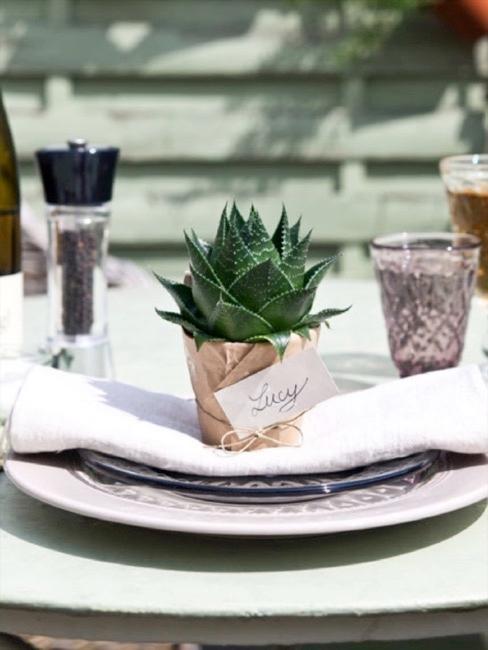 Decoración de mesa con plantas suculentas