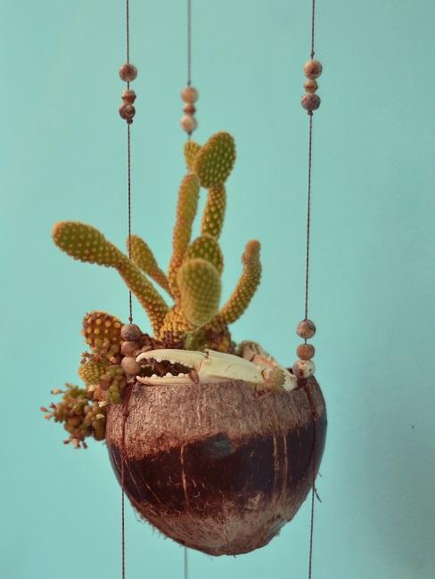 Kaktus in der Hängetopfvariante aus Kokosnuss