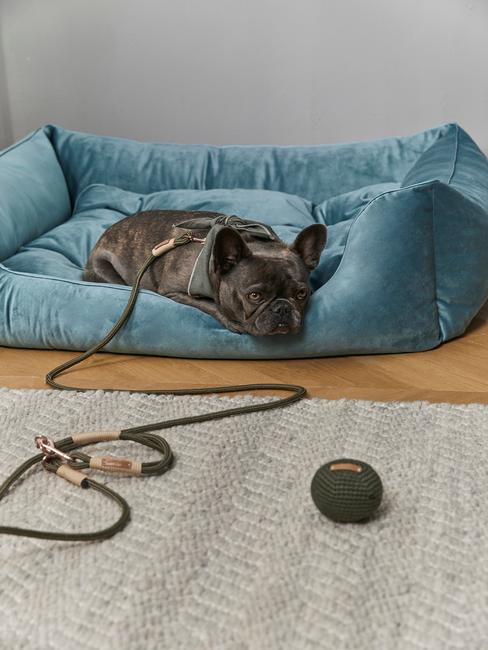 Cama para perros azul plomo con bulldog francés negro
