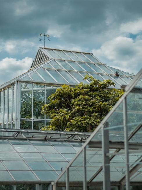 Invernadero urbano en un ático con paredes y tejado de cristal