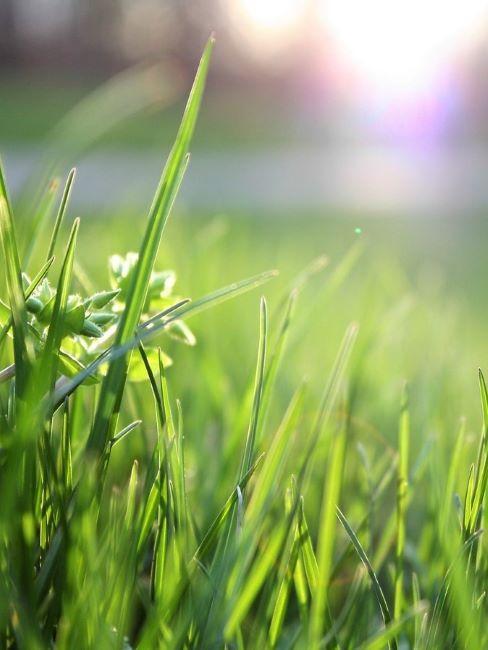 primo piano di fili d'erba sintetica in giardino