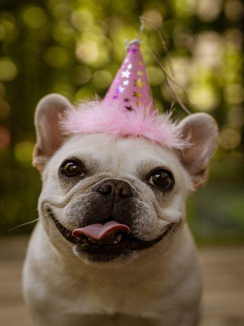 Hond met feest hoetje