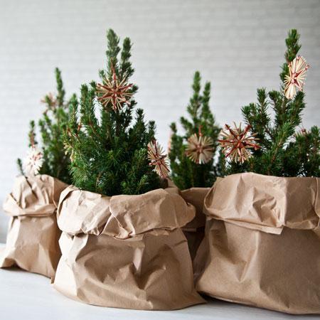 Weihnachtsbäume für kleine Räume