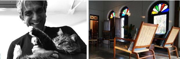 gatto e sedie