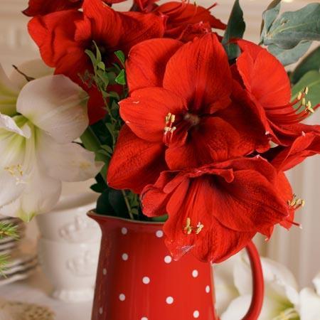Las flores también son para el invierno