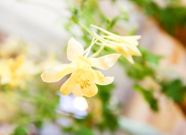 Fiore erbaceo