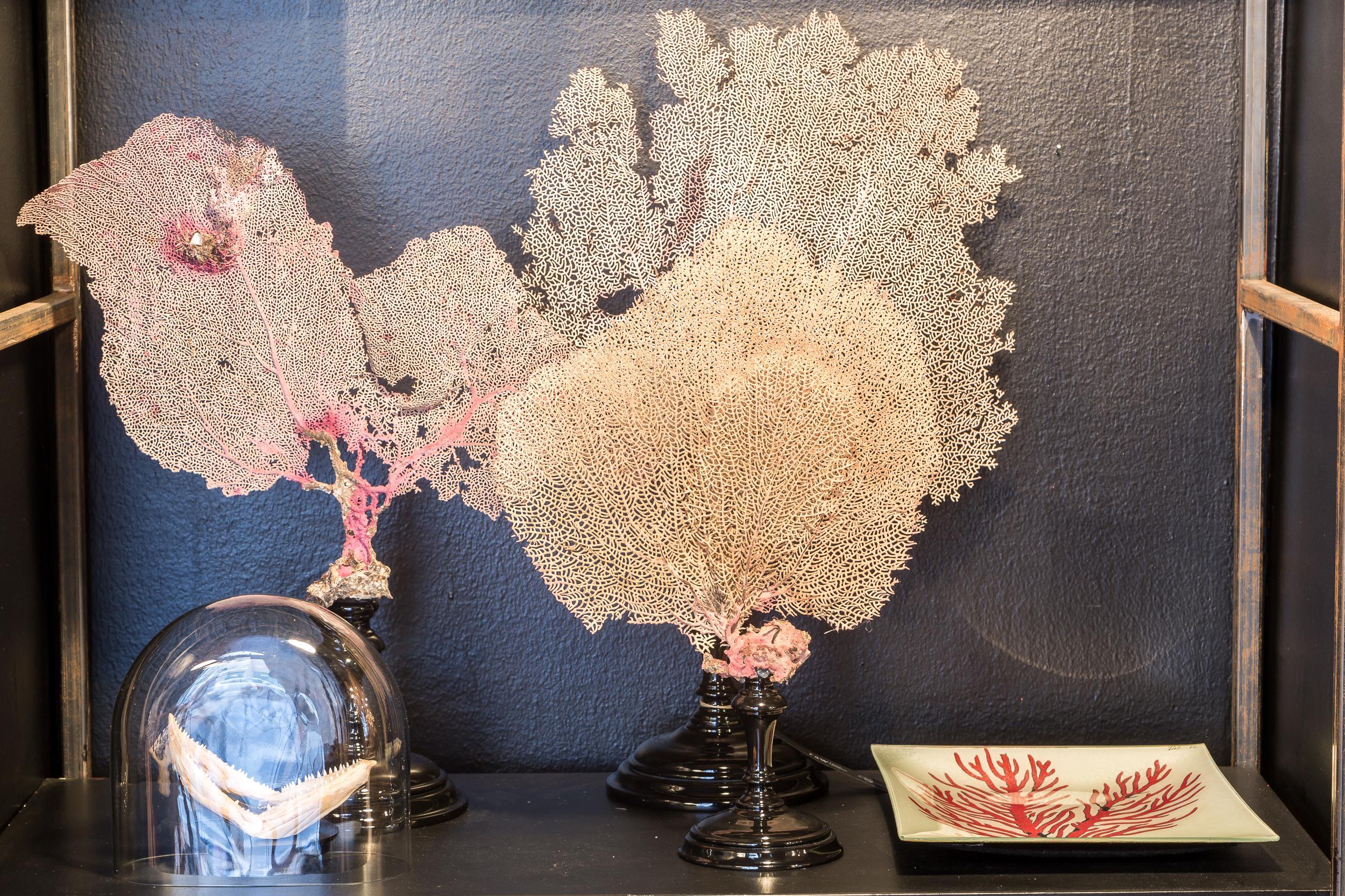 Corallo e forme naturali scaldano l'ambiente