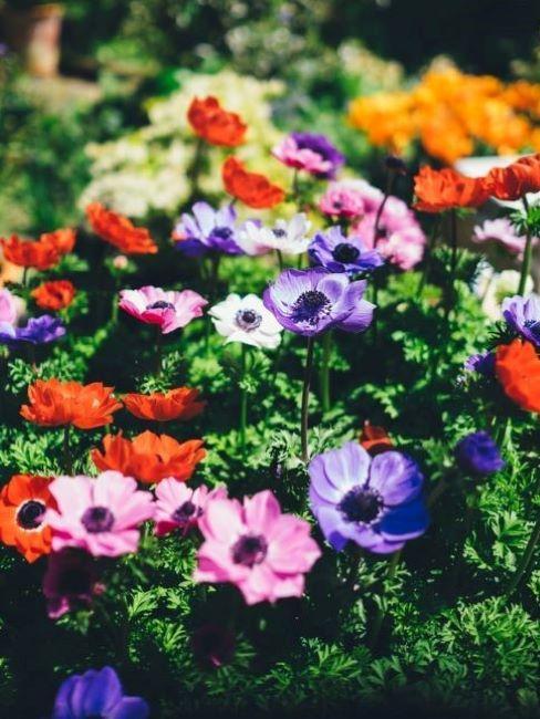 idee giardino piccolo fiori