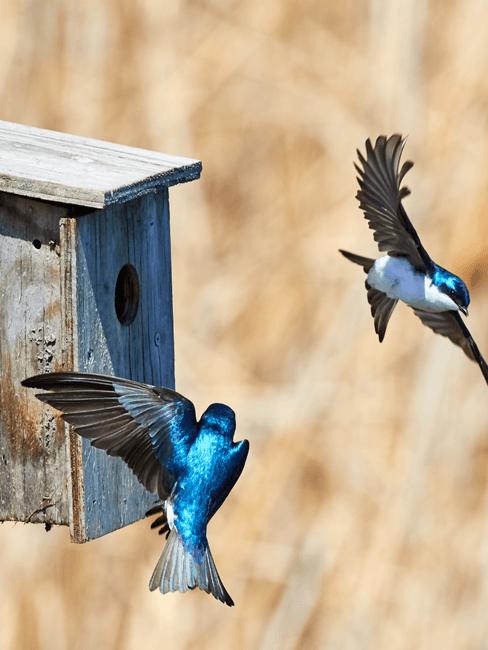 Vliegende vogels voor vogelhuis