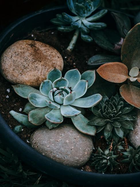 Maceta con piedras decorativas entre plantas
