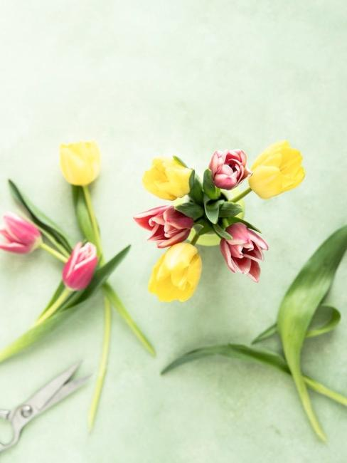 Verschieden farbige Tulpen für Deko mit Flaschen