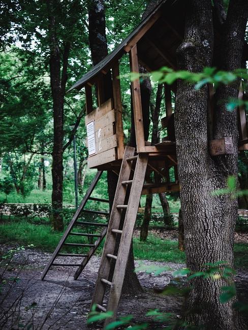 Domek na drzewie w lesie