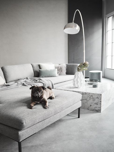 Wandfarbe Grau im Wohnzimmer mit hellgrauen Möbeln und Hund