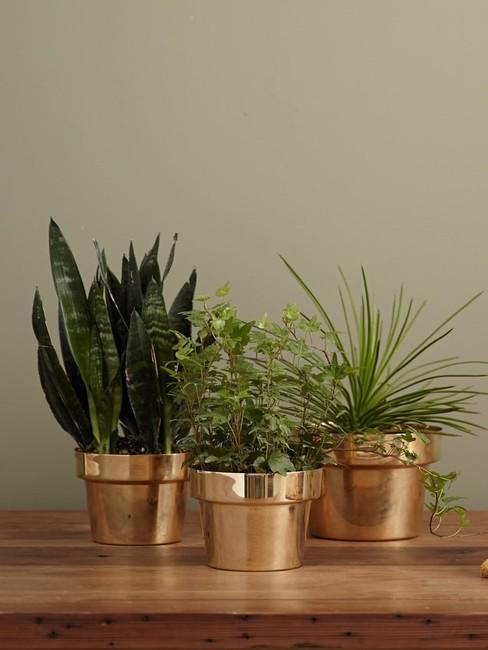 Trzy rośliny stojące na blacie w mosiężnych doniczkach