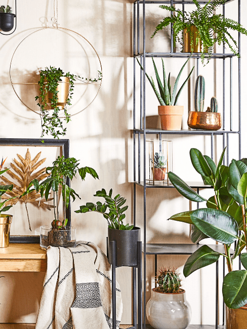 Ściana z roślinami wiszącymi i postawionymi na regale