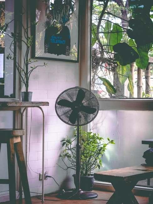 Pomieszczenie z roślinami oraz stojącym wiatrakiem
