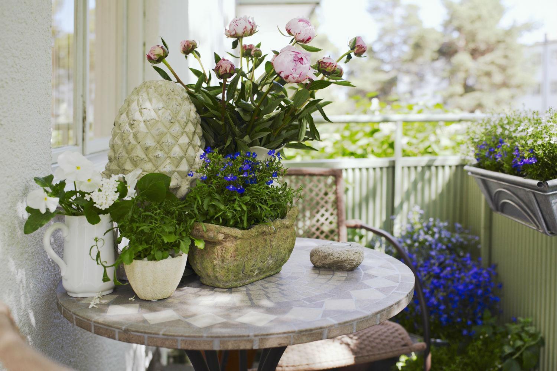 Decorare il balcone con piante e fiori perenni \u2013 Il giardino segreto