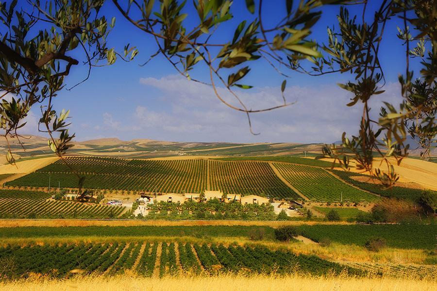 Donnafugata coltiva in 10 contrade diverse una pluralità di vitigni sia autoctoni che internazionali. Una scelta agronomica che punta a valorizzare le peculiarità dei diversi terroirs (suolo, altitudine, esposizione)  e delle diverse varietà per produrre vini complessi e ricchi di personalità.